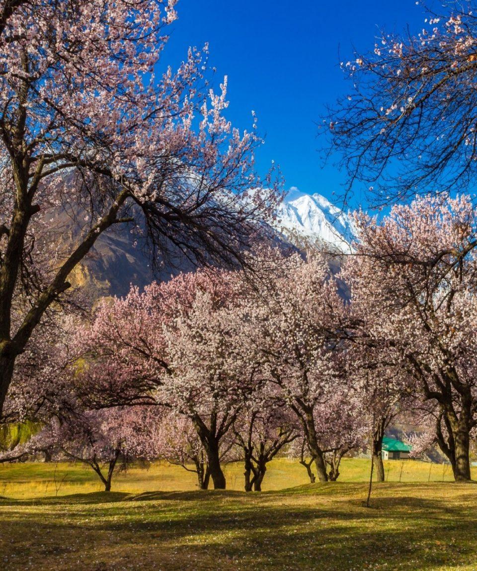 Spring in Hunza FNL